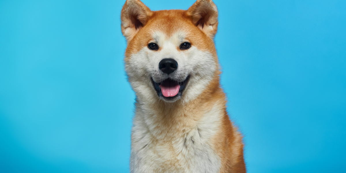 Dogecoin Amongst the Top-Performing Cryptos in Q1 2021